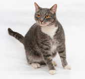 Gray tabby cat with orange eyes stands on gray Royalty Free Stock Photography
