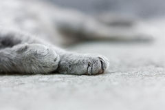 Gray tabby cat sleeping on the pavement. Pet summer daylight Royalty Free Stock Image