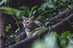 Gray Tabby Cat on Tree Rood Nature Photography Stock Photos