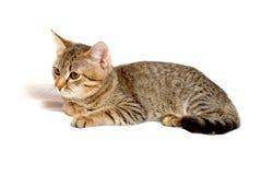 Gray tabby kitten. Stock Photo