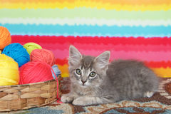 Gray tabby kitten by basket of yarn Royalty Free Stock Images
