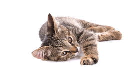 Gray tabby kitten lying forward her paw with claws on a white ba Royalty Free Stock Image