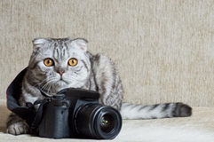 Gray tabby is studying camera. Gray tabby is studying black camera Stock Image