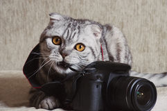 Gray tabby is studying camera. Gray tabby is studying black camera Royalty Free Stock Images