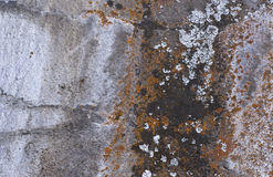 Gray Textured Lava Rocks With Colorful Lichen Stock Image