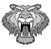 Gray tiger head Stock Images