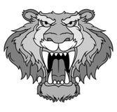 Gray tiger head. Illustration gray tiger head with big sharp canine in vector illustration