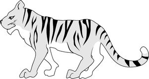Gray tiger Royalty Free Stock Photography