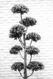 Gray tone bush bonsai tree Royalty Free Stock Photo
