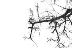 Gray tone of dead tree. Stock Image