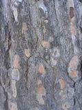 Gray Tree Bark Pattern Background Imagen de archivo libre de regalías