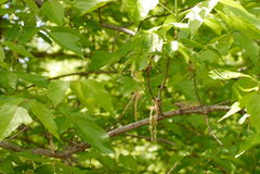 Gray tree frog Royalty Free Stock Image