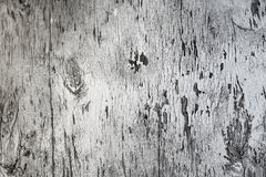 Gray tree. Old wood with peeling off paint stock photography