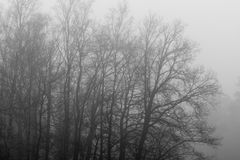 Gray tree outlines in the fog Stock Photos