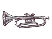Gray Trumpet Isolated sur un blanc Image libre de droits