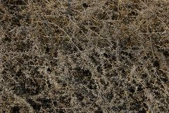 Gray vegetative texture from dry old grass