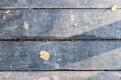 Gray vintage hardwood board at autumn. texture, background. Stock Images