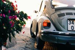 Gray Volkswagen Beetle Near Pink Flowers Stock Photo