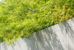 Gray wall with Bamboo Stock Images
