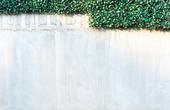 Gray wall and Plastics grass texture background Royalty Free Stock Images
