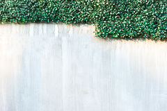 Gray wall and Plastics grass texture background Royalty Free Stock Image