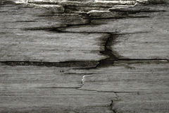 Gray weathered wood with dry rot. Gray cracking weathered wood with dry rotted areas. Use for restoration images or background texture Stock Photography