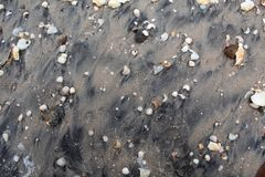 Gray wet sand with shells of various colors and sizes. stock photography
