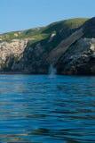 Gray Whale, der Santa Cruz Island wegbläst Lizenzfreies Stockbild