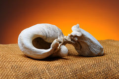 Gray Whale Inner Ear Bone Royalty Free Stock Photography