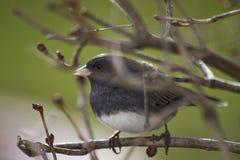 Gray/White Bird Perched Royalty Free Stock Photo