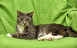 Gray and white cat on a green Stock Photo
