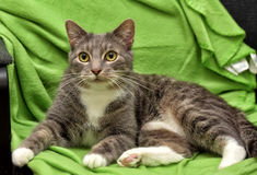 Gray and white cat on a green Stock Images