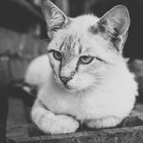 Gray-white cat outdoor Stock Images