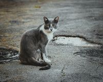 Gray white cat sitting on the pavement. Homeless sad wistful lonely stray cat on the background of the asphalt. Watching stock images
