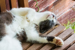 Gray and white fluffy kitten sleeps on his back on a wooden bench on a sunny summer day, stretching out legs behind head Stock Photography