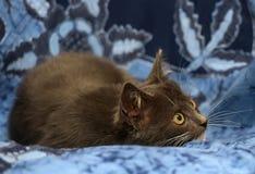 Gray and white kitten Stock Image