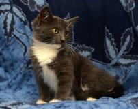 Gray and white kitten Royalty Free Stock Photo