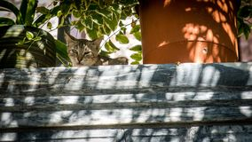Cat sitting on wall looking down at photographer royalty free stock image