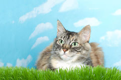 Gray and white tabby cat in grass Stock Photography