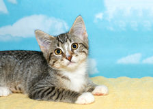 Gray and white tabby kitten portrait. Gray and white tabby kitten laying on a yellow blanket looking up hopefully, blue background with white clouds, Copy space Royalty Free Stock Image