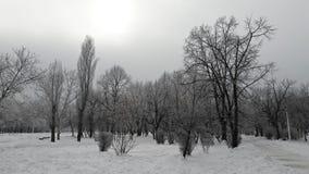 Gray winter Royalty Free Stock Photo