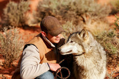 Gray wolf with an animal trainer Royalty Free Stock Photography