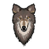 Gray Wolf Head Image stock