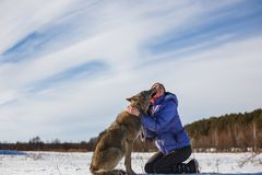 The gray wolf kisses the girl on the lips. Snowy field near the forest royalty free stock images