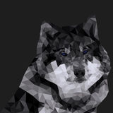 Gray wolf polygonal Stock Images