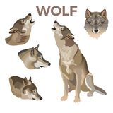 Gray wolves set vector illustration