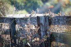 Old wood fence. Gray wood fence with prickly weeds in the autumn Stock Photo