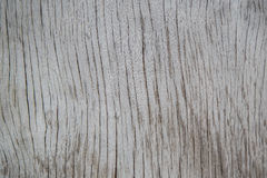 Gray wood textur stock photo