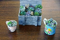 Gray wooden box and cups with plants and flowers stock image