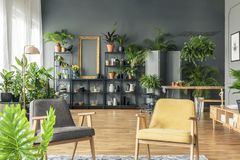 Gray and yellow armchair in spacious living room interior with p. Lants on metal rack against black wall Stock Photography